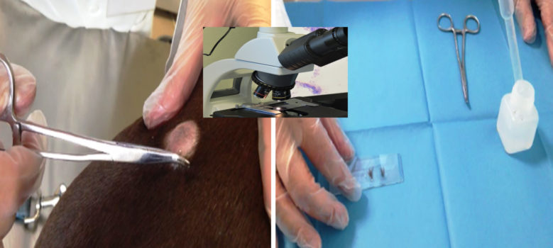 esame-microscopico-del-pelo